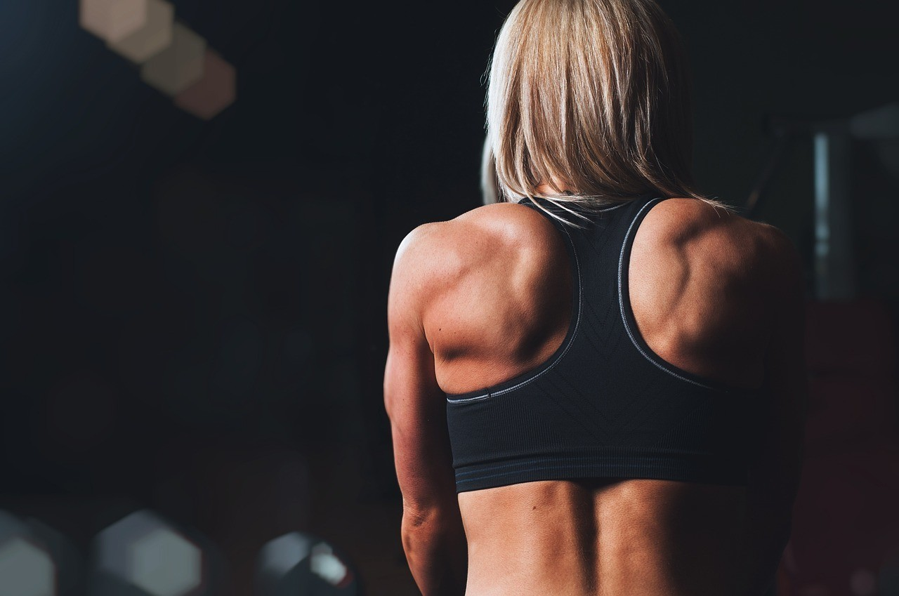 definición muscular 1