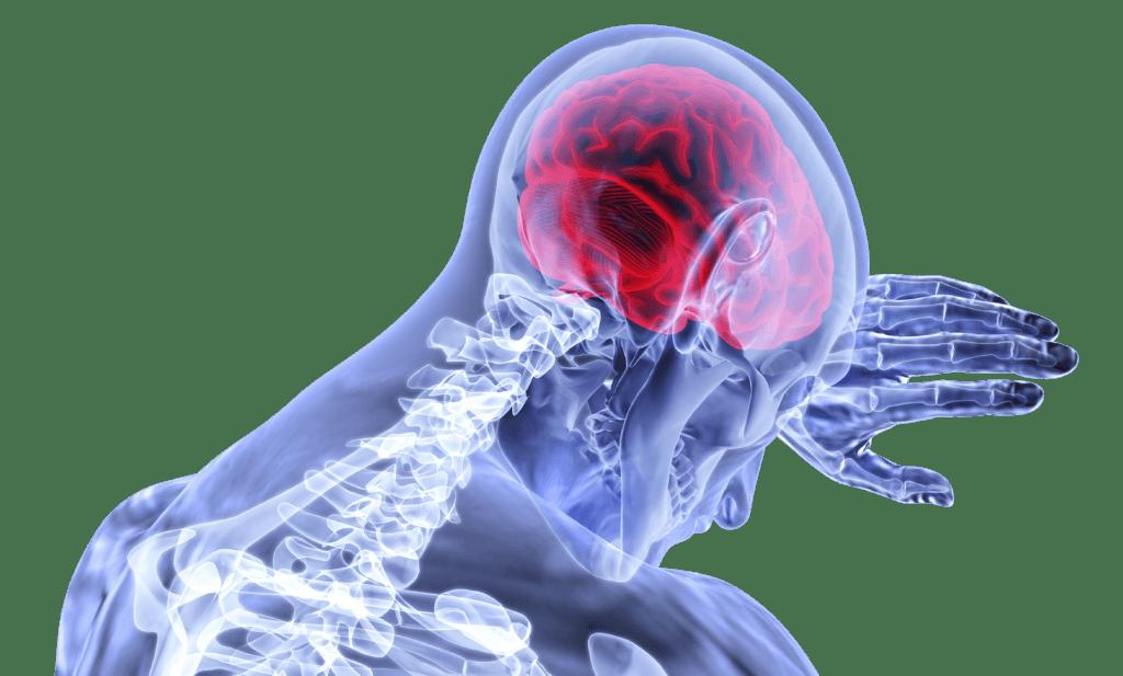 brain 3168269 1920 e1541422142722 1