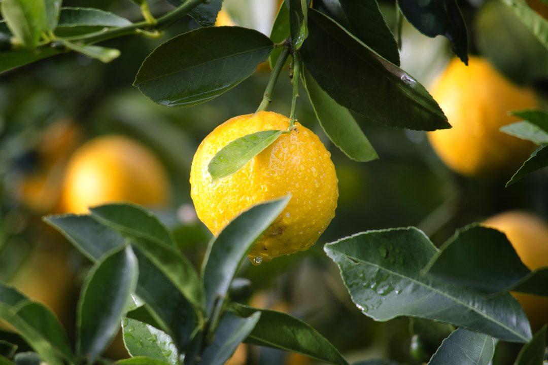 NUTRICIÓN/ Propiedades del limón