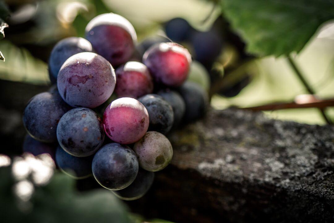 Propiedades y beneficios de las uvas